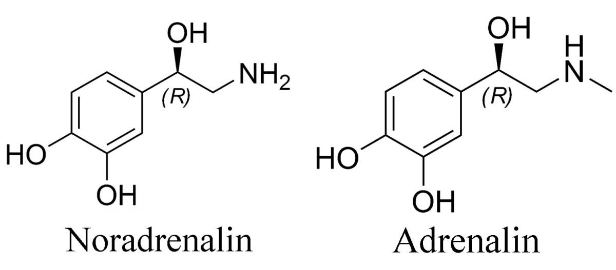 Adrenalin nedir Adrenalin: Tanımı, Rolü, Etkileri ve Fonksiyonları