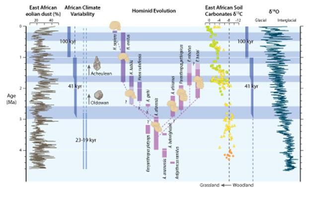 Şekil 5: Plio-Pleistosen Devri boyunca meydana gelen önemli paleoiklimsel olayların ve insansıların evrimiyle alakalı olayların özet şeması.Gri şeritler, Afrika ikliminin yüksek enlemlerdeki buzul döngülerinin başlangıcı ve şiddetlenmesiyle eşzamanlı olarak 2,8 (+- 0,2) milyon yıl önce ve daha sonra da 1,7 (+-0,1) milyon yıl ile 1,0 (+-0,2) yıl önce meydana gelen aşamalı değişimlerin ardından gittikçe artan biçimde daha kurak hale geldiği dönemleri belirtir. Soldan sağa: 1-) Okyanus Sondaj Projesi'nin 721/722 numaralı sahasındaki toprak kaynaklı toz yüzdesi ile devinimdeki değişkenliklere (23-19 binyıl) ve karakteristik buzul döngülerine (41 binyıl ve 100 binyıl) bağlanan toz akışının baskın döngülerindeki buna tekabül eden değişimler. 2-) İnsansı türlerinin tahmini ilk ve son görülüş tarihleri ve aralarındaki olası akrabalık bağları. 3-) Doğu Afrika'daki insansı yerleşimlerinden elde edilen ve ormanlık alandan otlaklara olan aşamalı geçişi belgeleyen toprak karbonat karbon izotop verileri. 4-) Bileşik bentik foraminiferlerden elde edilmiş ve yüksek enlemlerdeki buzul döngülerinin evrimini ve buzulsal değişkenliğin baskın döngüsünü gösteren oksijen izotop kayıtları.