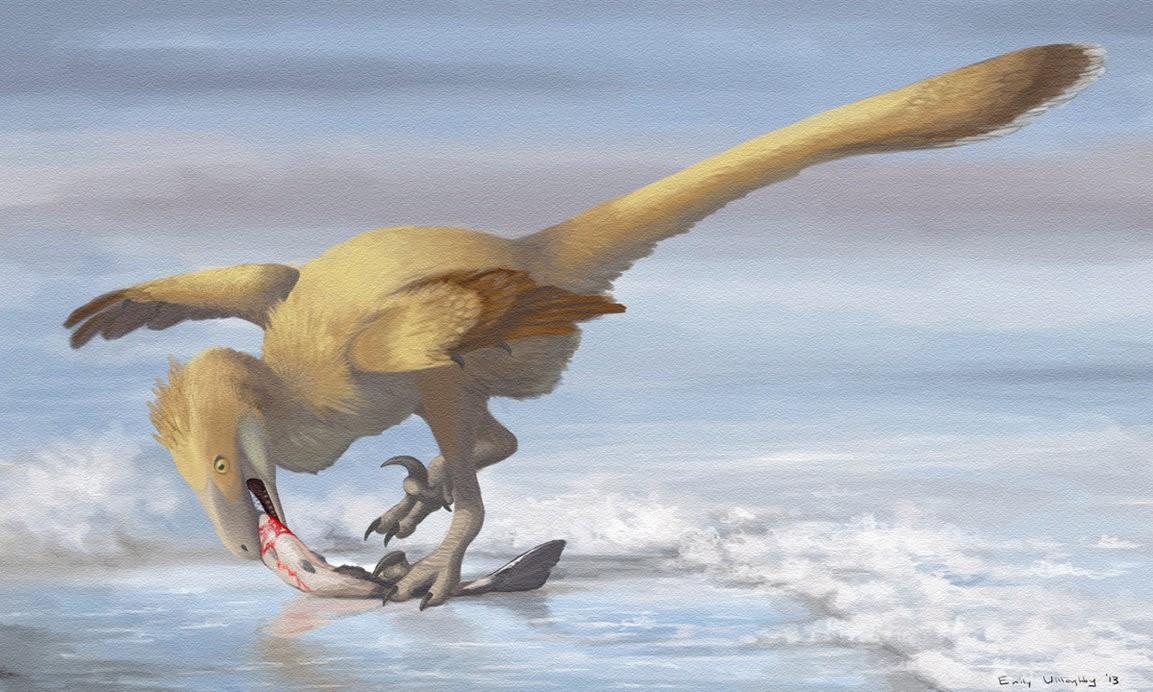 Şimdiye kadar bulunan Velociraptor fosilleri içerisinde V. mongoliensis ve V. osmolskae olmak üzere 2 türü tespit edilebilmiştir.