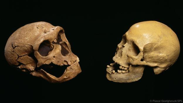 Bir Neandertal ile çağdaş insanın kafatasları