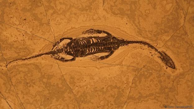 Bir deniz sürüngeni fosili