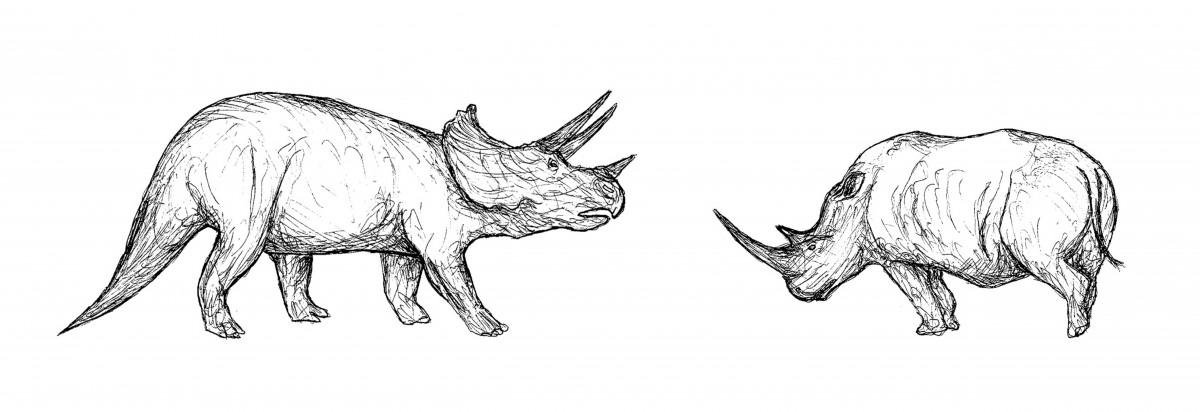 Birbirinden tamamen bağımsız olan iki canlı, Triceratops(dinozor) ile gergedan (memeli) türlerinde aynı savunma yapılarının evrimleşmesi...