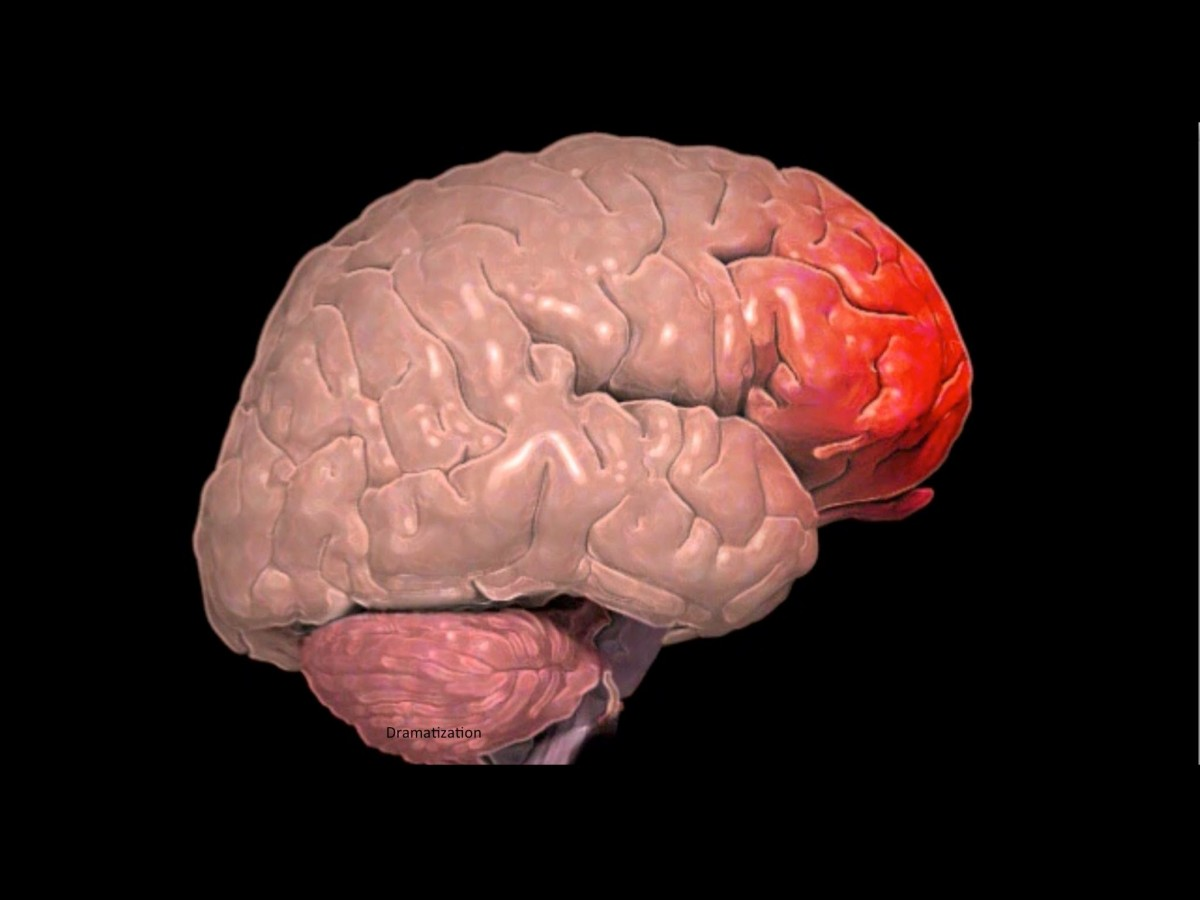Beynimizde bulunan frontal (ön) lop...