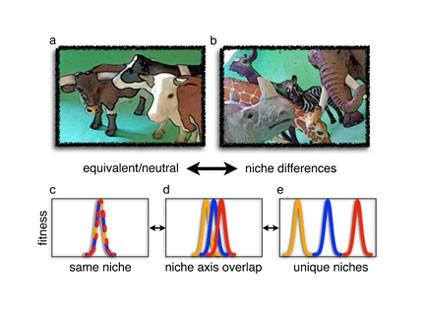 Şekil 1: Nötral ve niş(A) Birbirine çok benzeyen ot obur hayvanlar eşdeğer ve öz itibariyle nötral olarak düşünülebilirler. (B) Farklı bitkiler yiyen, hatta farklı zamanlarda veya farklı yüksekliklerde aynı bitkileri yiyen ot oburlar farklı veya örtüşen nişlere sahip olacaklardır. Buna zıt olarak nötral teori, birbirinden epey farklı gözüken türlerin bile ekolojik anlamda birbirine eşdeğer olabileceğini söyler. (C-E) Türler, çevresel bir değişim veya niş ekseni boyunca belli bir noktada en iyi uyum başarısına sahiptirler. Nötral türler tamamıyla örtüşen nişlere sahiptirler: aynı nişi paylaşırlar ve uyum başarıları çevresel bir değişim veya niş ekseni boyunca birbirine benzer şekilde değişir. Daha büyük niş farklılıkları türler arasında daha az niş örtüşmesine tekabül eder: türler, uyum bakımından, çevresel bir değişim veya niş ekseni boyunca değişik noktalarda farklılık gösterirler.