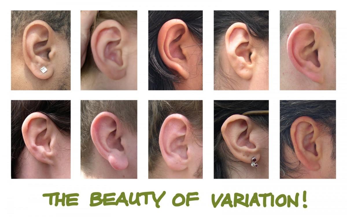 İnsanlarda kulak yapısı bakımından çeşitlilik... Kimi zaman çeşitlilikteki ufacık farklılıkların evrimsel bir anlamının nasıl olabileceği kafalarda soru işareti bırakabilmektedir. Örneğin yukarıdaki fotoğraftaki kulak yapıları arasındaki farklılıklar nasıl olur da evrimsel olarak avantaj ya da dezavantaj sağlayabilir? Bu durum da, kendi türümüzün gözlerinden, son derece kısıtlı bir bakış açısına sahip olmaktan kaynaklanmaktadır. Vahşi doğada en ufak farklılıklar bile hayatta kalıp kalmayacağınızı belirleyebilir. Örneğin kulak yapınızdan ötürü belli frekanstaki sesleri birazcık daha iyi yakalayabilirseniz hayatta kalma şansınız %1 oranında artabilir. Bu %1'lik artış tek başına oldukça etkisiz gözükebilir; fakat 1000 nesil boyunca süregelen %1'lik avantaj, çok ciddi farklılaşmaların önünü açabilmektedir. Dahası, kulak şekli gibi bir özellik sadece hayatta kalma değil, üreme konusunda da avantaj sağlayabilir. Sonuçta bireyler birbirlerini ilk etapta genel fiziksel özelliklerine göre seçmektedirler ve buna bağlı olarak onlarla üremektedirler. Vücudumuzun ve organlarımızın şekilleri, cinsel tercihlere de yön verebilmekte, dolayısıyla Cinsel Seçilim aracılığıyla evrime doğrudan etki edebilmektedir.