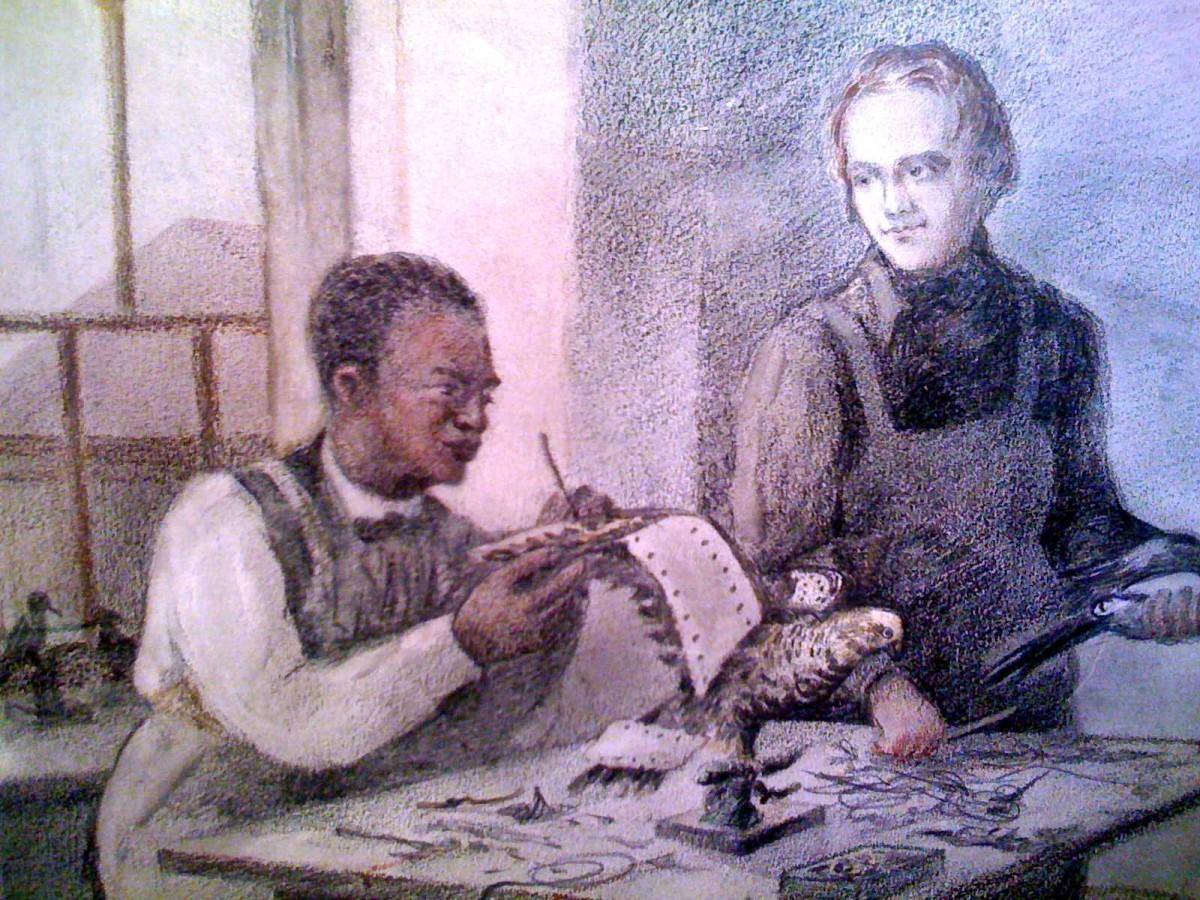 Darwin, Edinburgh'ta kendisiyle herhangi bir ilişkisi olmayan, Guyanalı siyah derili bir köleden taksidermi (hayvan doldurma) öğrenirken resmedilmiş... [Kaynak: Rough Guide to Evolution]