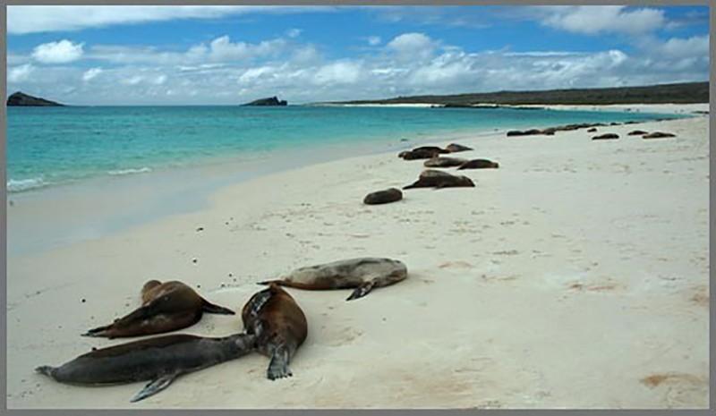 Galapagos sahillerinde yatan deniz aslanları...