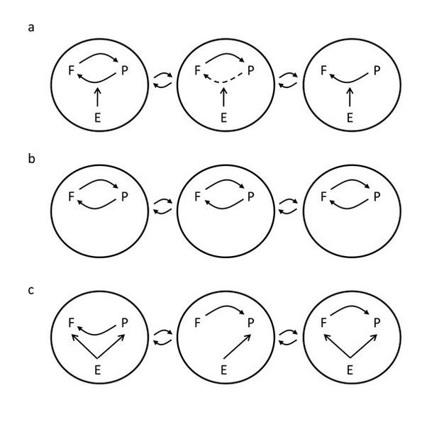 Şekil 1: Birlikte-Evrim Coğrafi Mozaik Teorisi'nin (GMTC) üç unsurunun görece önemi ve karşılıklı-olmayan seçilim üzerine alternatif hipotezler.Her daire, ayrı bir yerel topluluğu temsil eder. İçlerindeki oklar, bitkiler arasındaki seçilimi (P), mikorizal mantarları (F) ve abiyotik ortamı (E) temsil etmektedir. Dairelerin dışındaki oklar ise, topluluklar arası gen akışını göstermektedir. a) Hipotez 1: GMTC'nin üç unsuru da -sıcak noktalar/soğuk noktalar, seçilim mozaikleri ve özelliklerin birbirine karışması- önemlidir ve iki türün ortaya çıktığı toplulukların içinde ve arasında çeşitlenmeyi yönlendirmede etkin rol oynamak için etkileşime girerler. Karşılıklı seçilim bazı topluluklarda gösterilmiş olup (sıcak noktalar) bazılarında ise gösterilmemiştir (soğuk noktalar). Kesik çizgilerden oluşan ok, ilk topluluğa kıyasla, mantarlarda bitki seçiliminin farklılık gösterdiğini belirtir ve bir seçilim mozaiğine işaret eder. Abiyotik ortamın başlıca etkisi, bitkilerin mikorizal mantarlara uyguladığı türler arası seçilim üzerinde değişiklik yapmaktır. b) Hipotez 2: Birlikte-evrimsel seçilim önemlidir fakat popülasyonlar arasında bağıntılıdır (yani, gerçek coğrafi seçilim mozaikleri [G x G x E etkileşimleri] ve sıcak noktalar/soğuk noktalar, görece önemsiz ya da olağandışıdır). Yine de, özelliklerin yeniden karıştırılma süreci sebebiyle soyyapıların topluluklar arasındaki dağılımı farklılaşırsa, birlikte-evrim coğrafi açıdan değişkenlik gösterebilir. c) Hipotez 3: Süregelen yerel birlikte-evrim seçilimi, abiyotik ortamsal faktörlerce ya da bir türün diğerine uygulamasıyla türler üzerinde gerçekleşen ve karşılıklı-olmayan seçilime kıyasla, daha az bir öneme sahiptir. Kaynak: 2012Nature EducationModified from Hoeksema 2010.